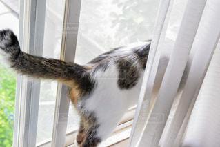猫の写真・画像素材[593776]