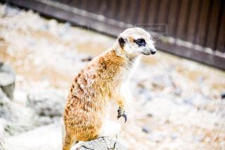動物園の写真・画像素材[600032]