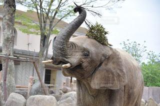 象の写真・画像素材[600041]