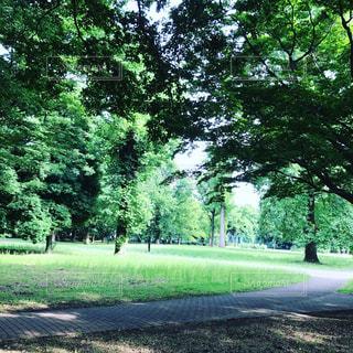 公園緑爽やかのんびり - No.589601