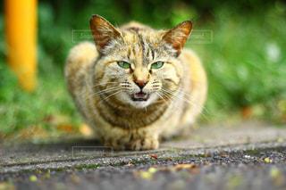 猫の写真・画像素材[589710]