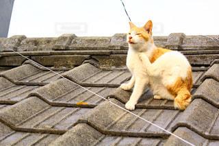 猫 - No.622162