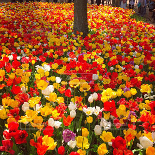 花の写真・画像素材[637041]