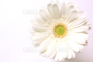 花の写真・画像素材[656051]