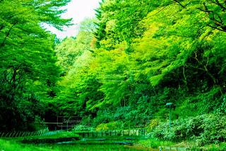 森林 - No.656063