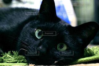 猫 - No.656065