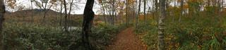 秋の道の写真・画像素材[825071]
