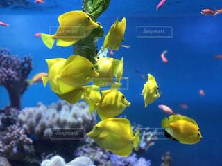 海の綺麗な生き物の写真・画像素材[830931]