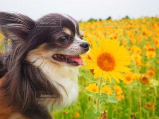 犬の写真・画像素材[614166]