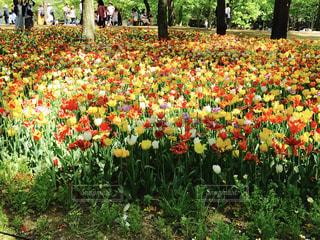 春の写真・画像素材[590577]