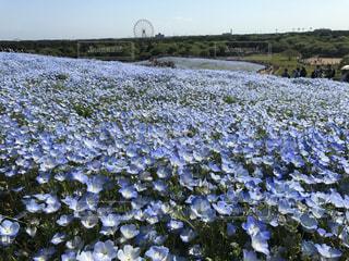 春の写真・画像素材[590582]
