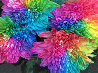 花の写真・画像素材[590664]