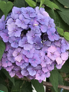 花の写真・画像素材[590668]