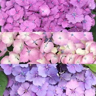 花の写真・画像素材[590671]