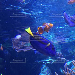 海の写真・画像素材[594041]