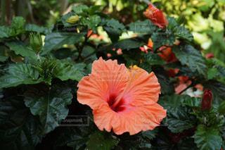 花の写真・画像素材[614686]