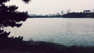 水面の写真・画像素材[595044]