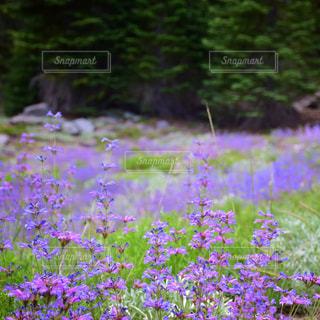 花の写真・画像素材[615687]
