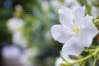 自然の写真・画像素材[591476]