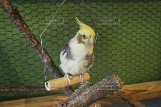 鳥の写真・画像素材[591479]