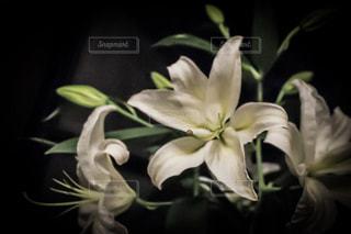花の写真・画像素材[591480]