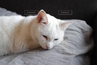 猫の写真・画像素材[591579]