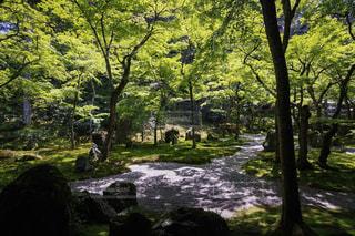 自然の写真・画像素材[591586]