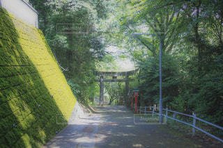自然の写真・画像素材[591588]