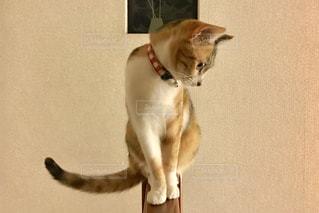 猫の写真・画像素材[591640]