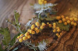 花の写真・画像素材[591641]