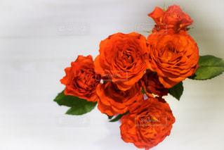 花の写真・画像素材[591759]