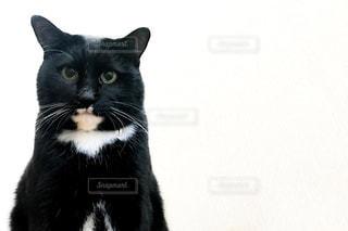 猫の写真・画像素材[591761]