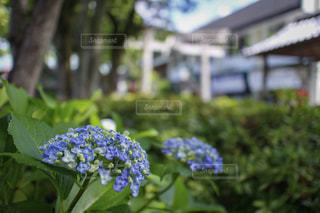 風景の写真・画像素材[591838]
