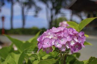 風景の写真・画像素材[591839]