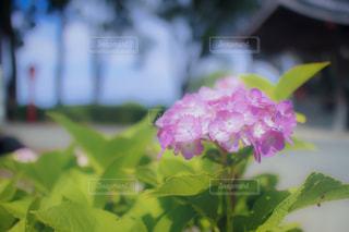 風景の写真・画像素材[591840]