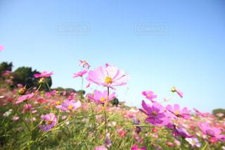 植物にピンクの花の写真・画像素材[755708]