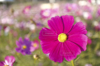 近くの花のアップの写真・画像素材[755709]
