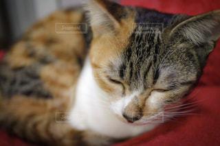 近くに猫のアップの写真・画像素材[755710]