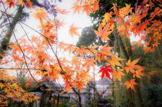 木のカラフルな花のグループ - No.755711