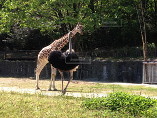 動物園の写真・画像素材[592339]
