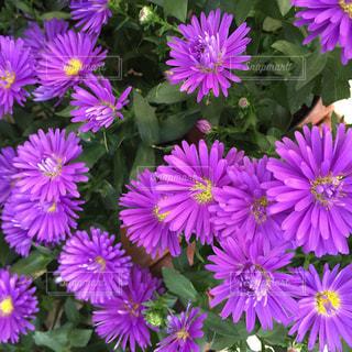 花の写真・画像素材[596694]