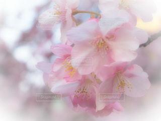 花の写真・画像素材[343188]