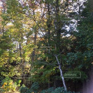 樹木の写真・画像素材[592755]