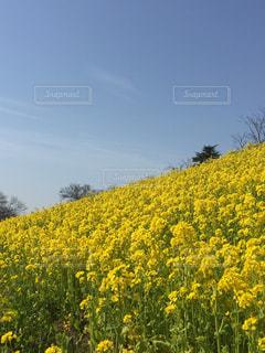 花畑の写真・画像素材[592973]