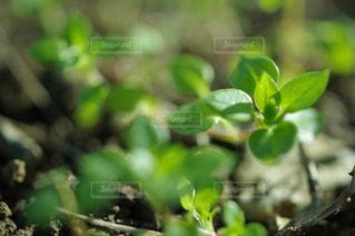 自然の写真・画像素材[593184]