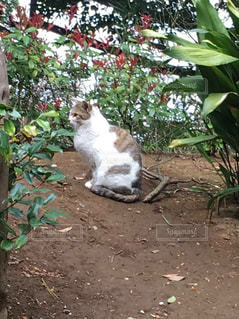 猫の写真・画像素材[594656]