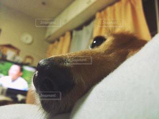 No.596059 犬