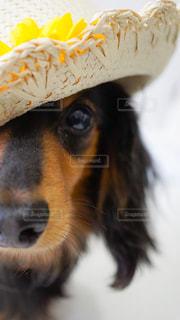 犬の写真・画像素材[594737]