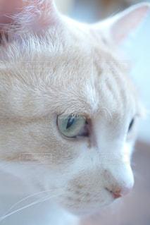 猫の写真・画像素材[606112]