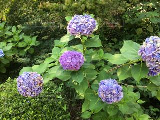 花の写真・画像素材[674372]